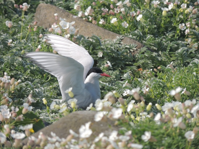 Finding nesting sites