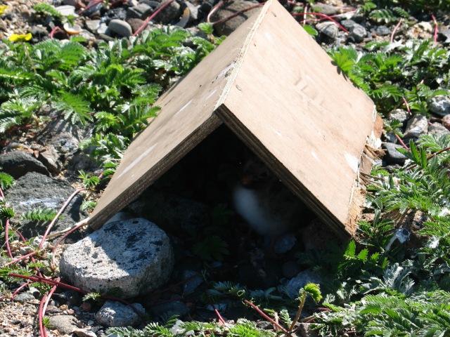 Chick shelter
