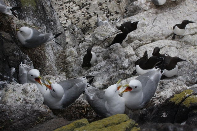 Find out more about our cliff nesting species