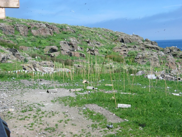 kirkhaven terns