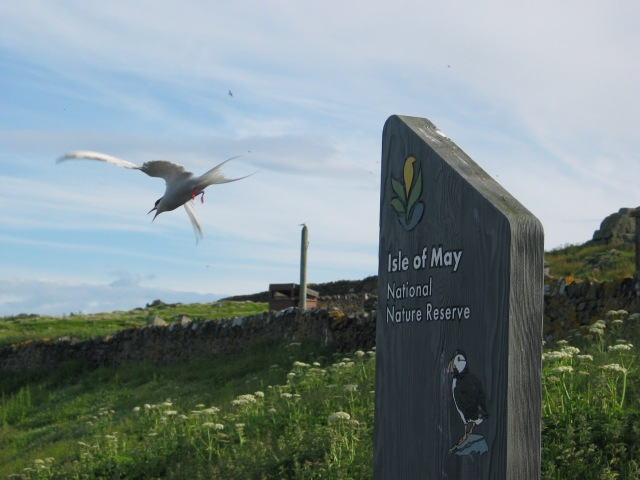 Tern and sign
