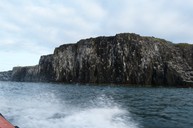 Soon the west cliffs of the 'May' will be full of seabirds