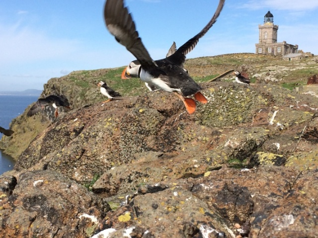 And away! bye bye Puffin!
