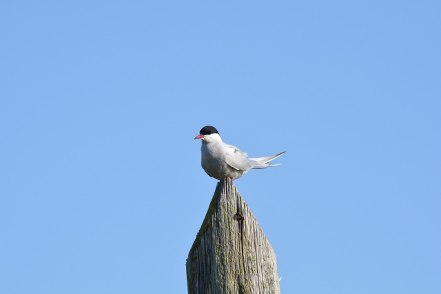 The Terns have landed