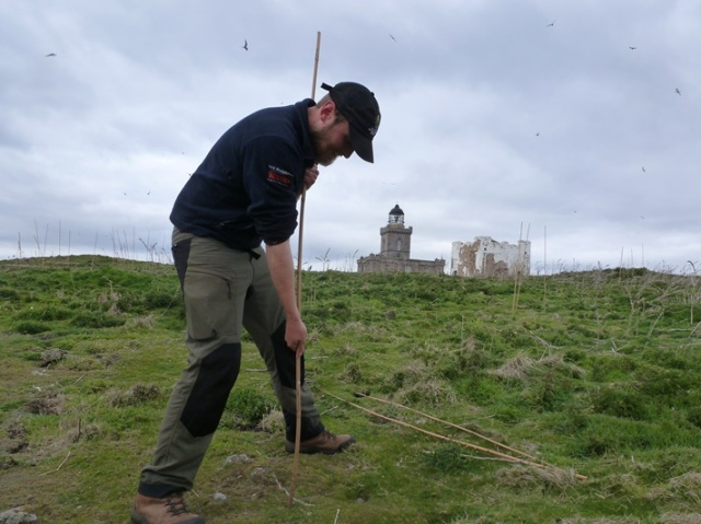 Preparing anti-predator garden canes (to break up the flight patterns of the large Gulls) to protect nests