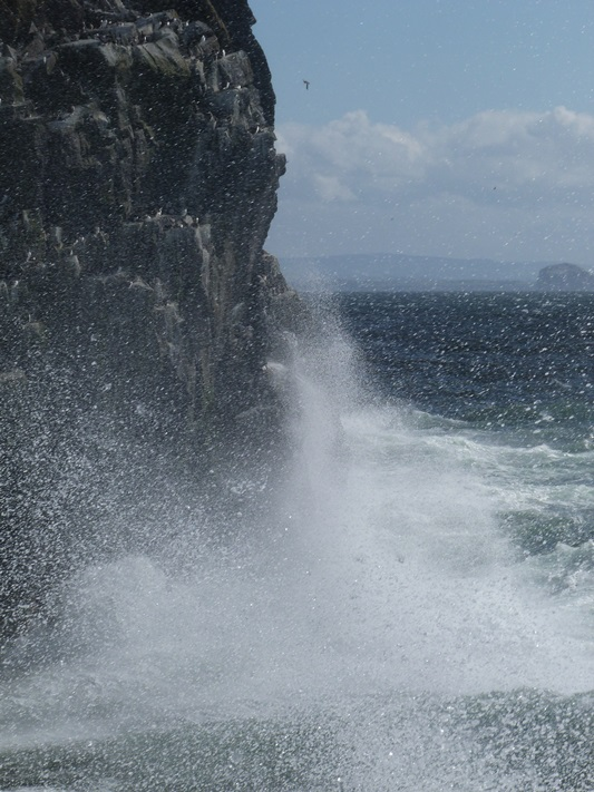 ...and that includes for the seabirds; windy weather and heavy seas
