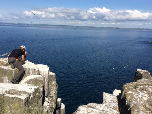 Our cliff counts continue as we count our breeding seabird populations