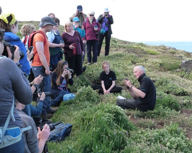 Puffin ringing demonstrations on the Isle of May (Mhairi Gallacher)