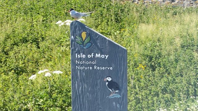 Welcome to the Isle of May. You will be pecked!