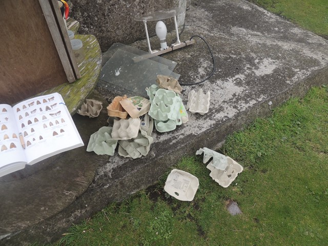 The light and egg boxes, which provide the moths with cover whilst in the trap.