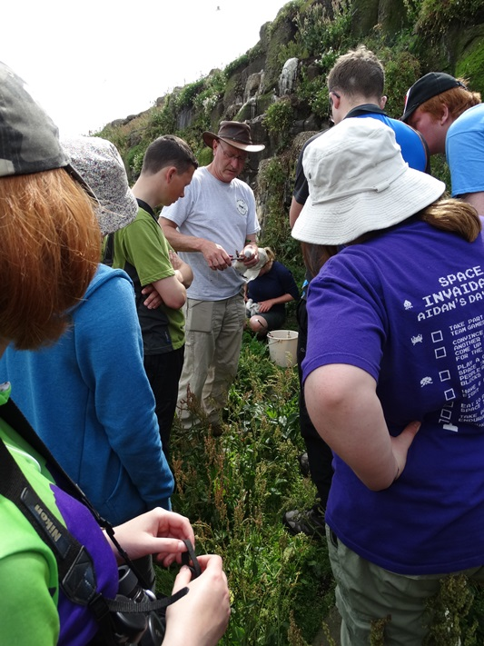 Learning how to ring Kittiwakes