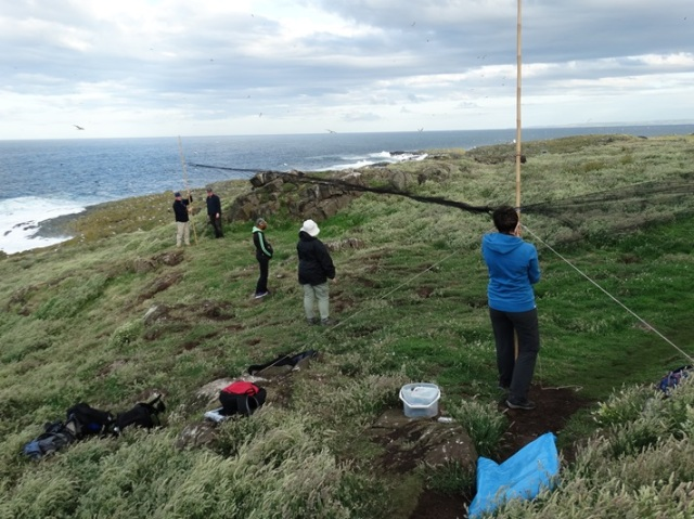 Setting nets up to ring Puffins