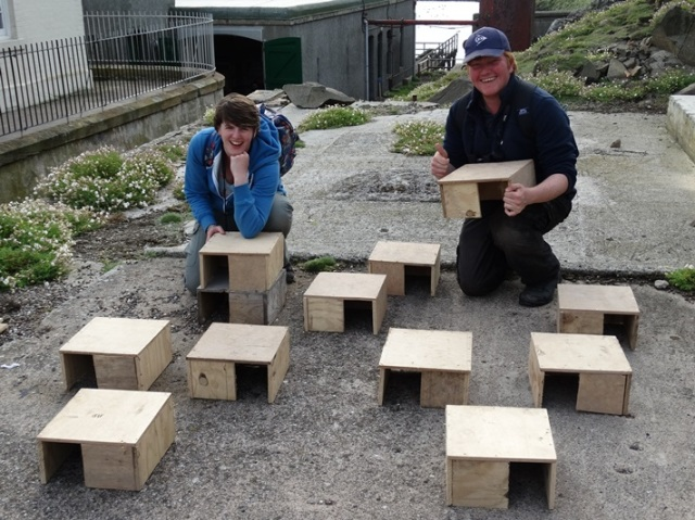 Tern boxes complete and ready to go!
