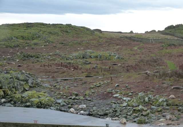 View from the visitor centre...Seals taking over!
