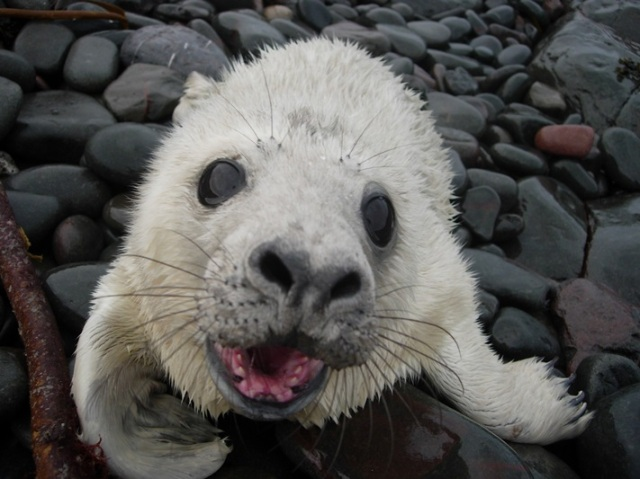 You looking at me? I'm a seal pup!