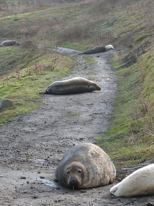 Seals galore scattered across the island