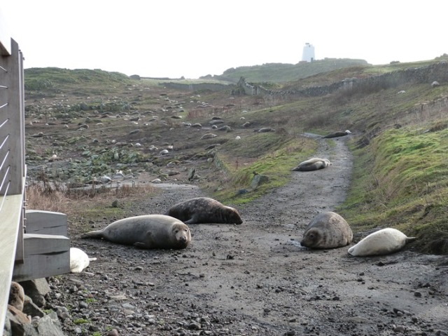 Road closed! The main M1 on the Isle of May is closed to Seals