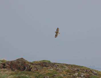 Captured in flight (Alan Lauder)
