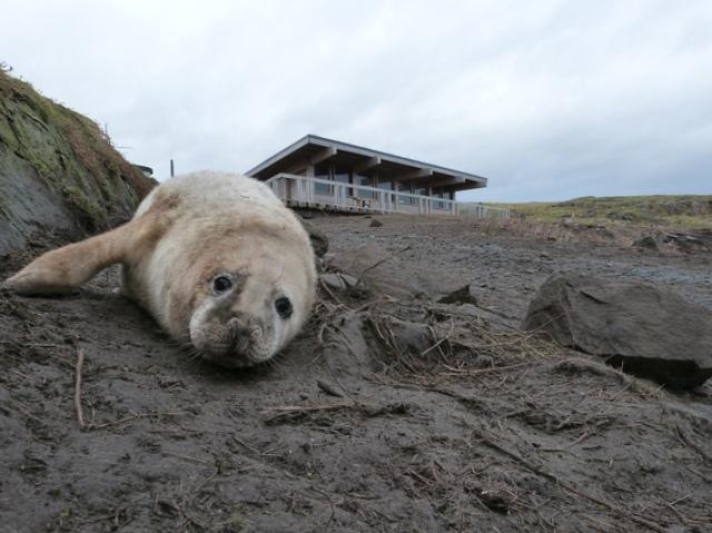 Seal visitor centre