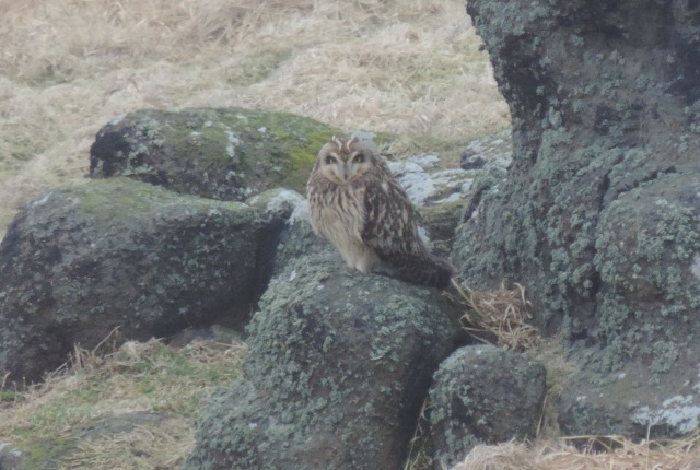 SE Owl 234