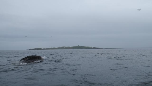 4 Sperm Whale (Mark Newell)