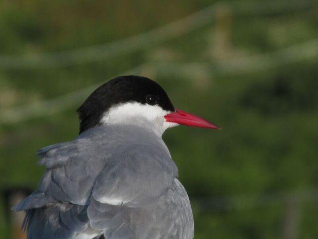 A Tern 3