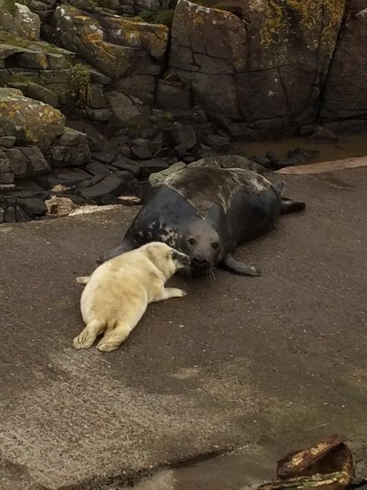 seal-and-mum
