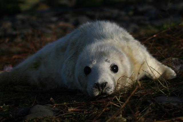 seal-pup-39