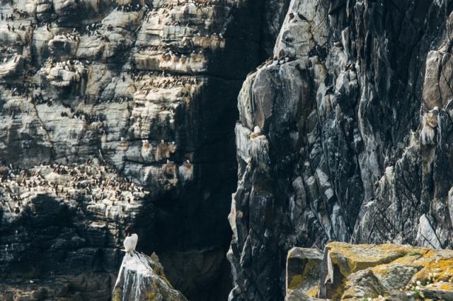Cliffs (Joe Turner CEH)