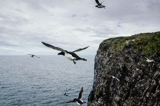 Razor in flight (Joe Turner)