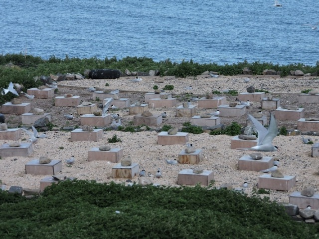 Tern city