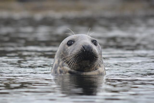 Femal Seal
