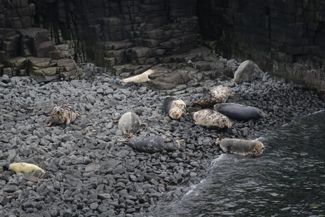 Pilgrims Seals (1)