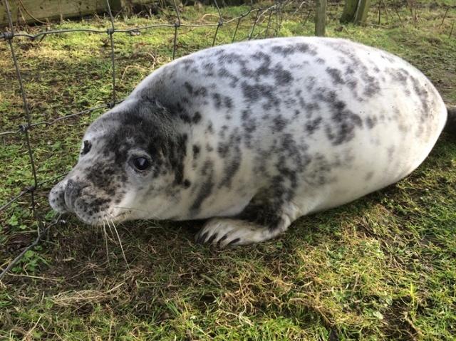 fat pup 2