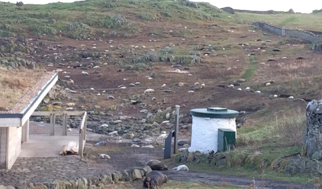 Seal colony 1