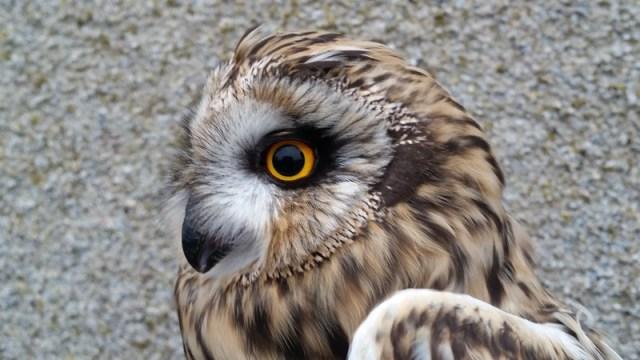 SE OWl 2 (Calum Scott)