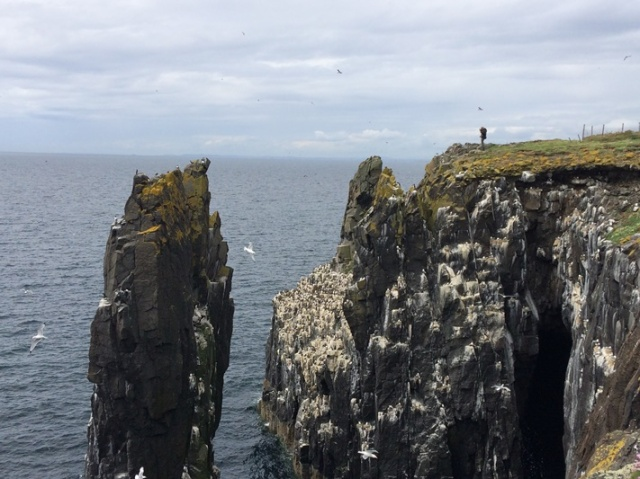 cliff count 3