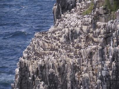 IOM Cliffs