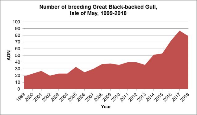 GBB Gulls