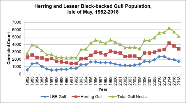 Herring &LBB Gulls