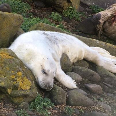 1 Pup seal