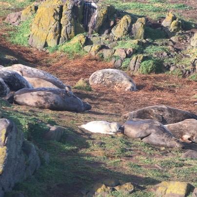 Seal island 2