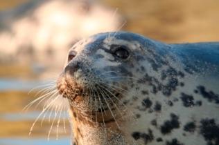 Seal mum 1
