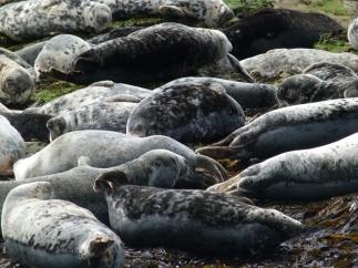 Seal mum 3