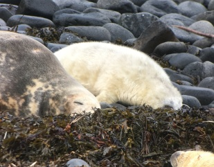 Seal mum 4