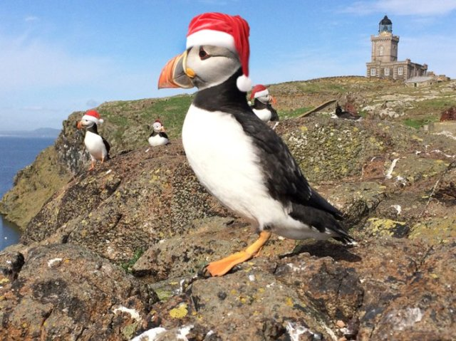 CHristmas puffin