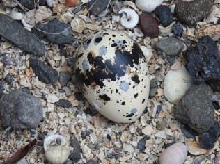 2 Egg