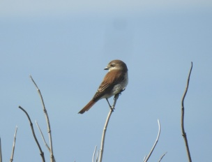 2 RB SHrike 6th June 2019