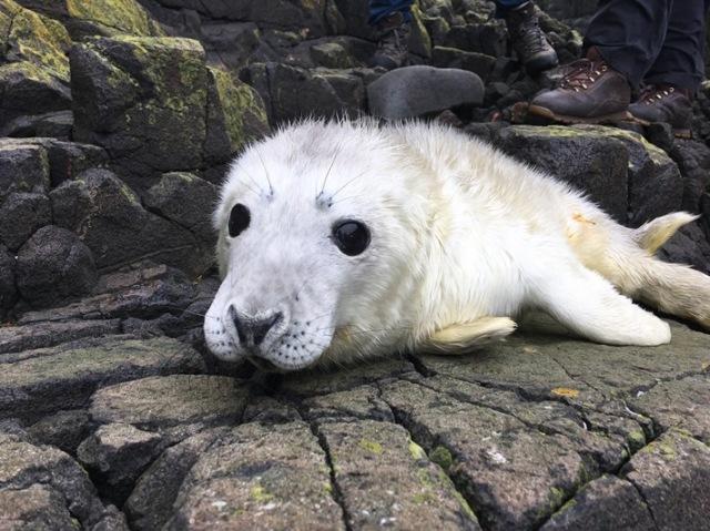 2 Seal pup