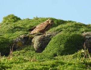 2 owl
